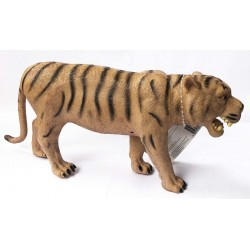 TIGRE 30 CMS NATIONAL GEOGRAPHIC